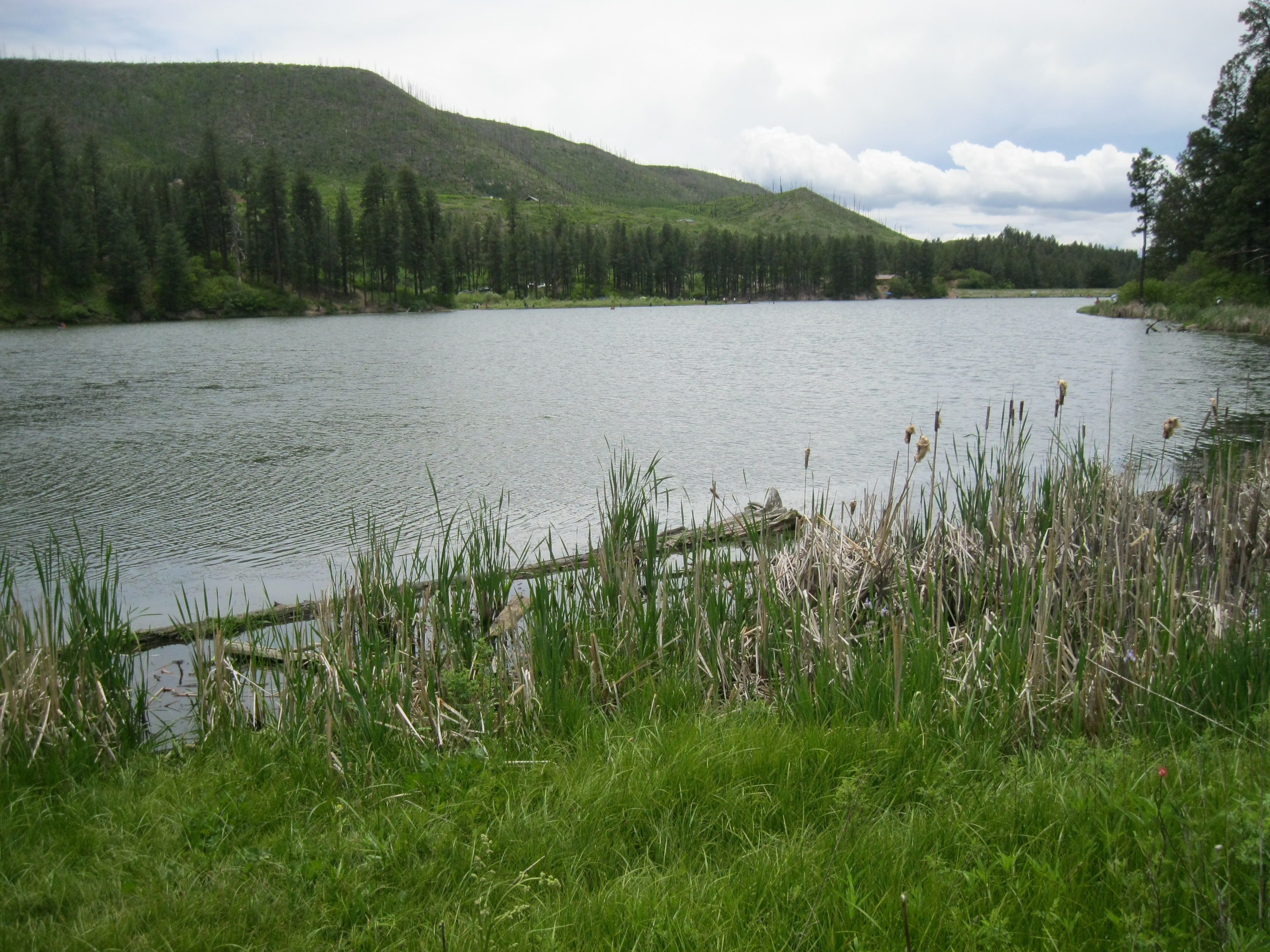 Jemez Fishing Report Jemez Mountain