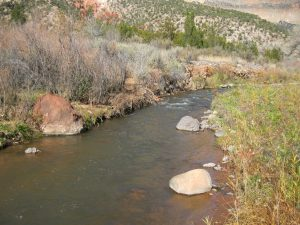 Water Quality On The Lower Jemez River Is Excellent Right Now And Will Provide For A Good Winter Fishery