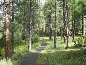 San Antonio Campground Pathway